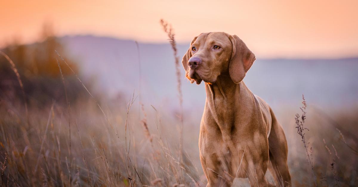 addestrare un cane da caccia