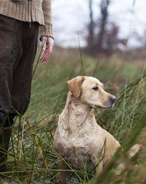 addestriamo-cane-caccia