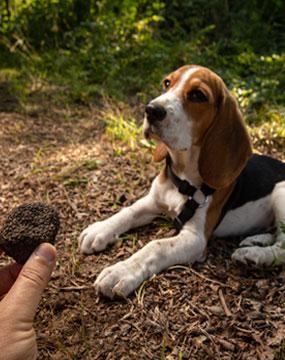 addestriamo-cane-tartufi