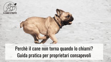 cane-corso-non-torna-richiamo
