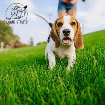 cani-corsi-migliore-addestramento-webinar