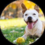corsi-cani-sales-addestrato