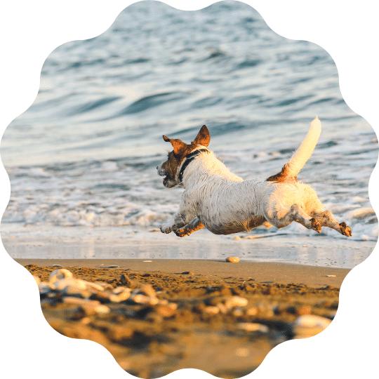 perchè cane non torna corso