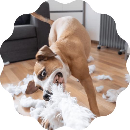 perchè cane distrugge casa corso