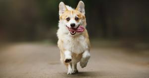 addestrare un cane al richiamo
