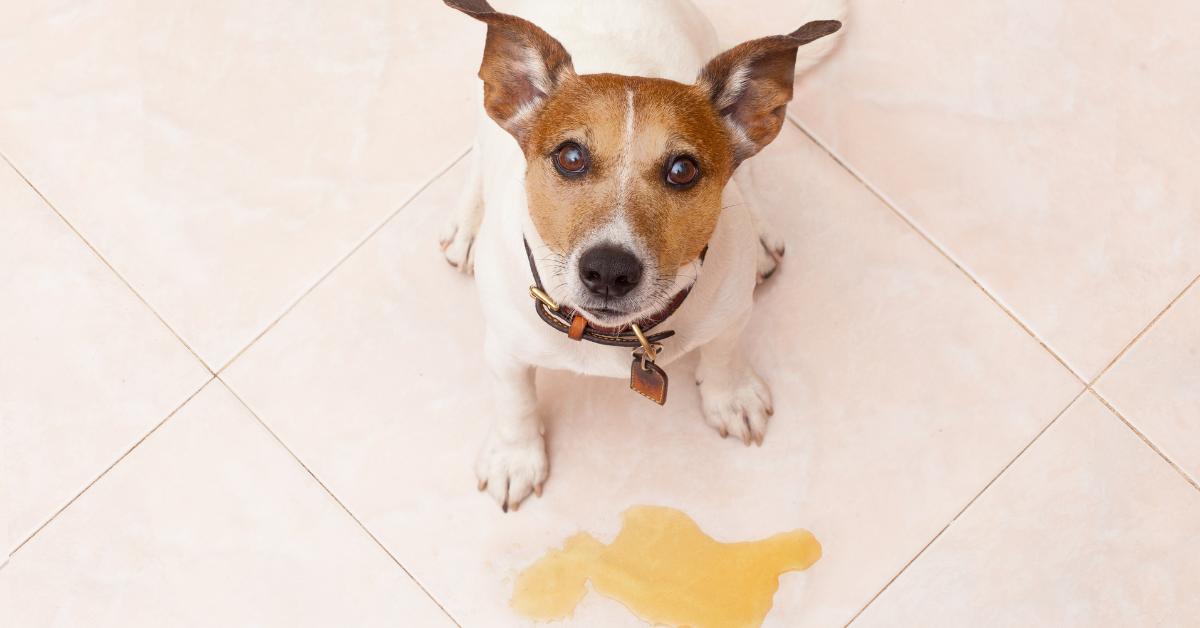 addestrare il cane a fare i bisogni