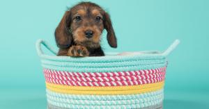 come addestrare un cucciolo