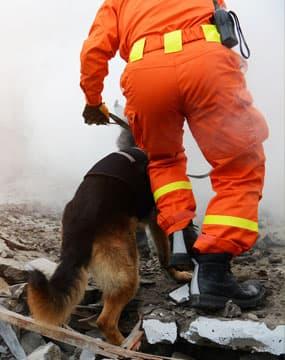 addestramento-cani-soccorso
