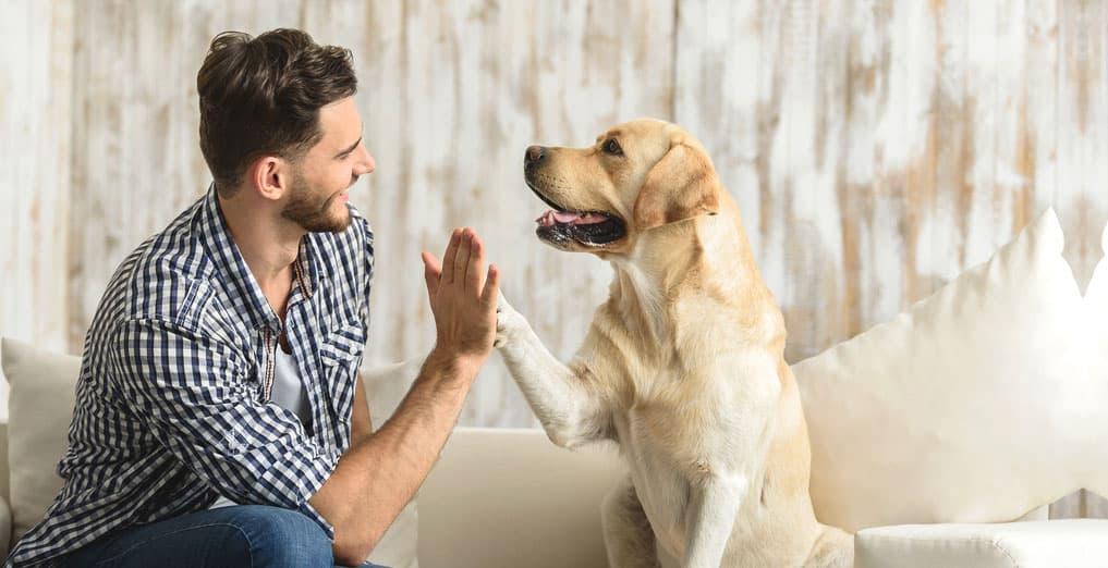 addestrare-cane-linguaggio-verbale