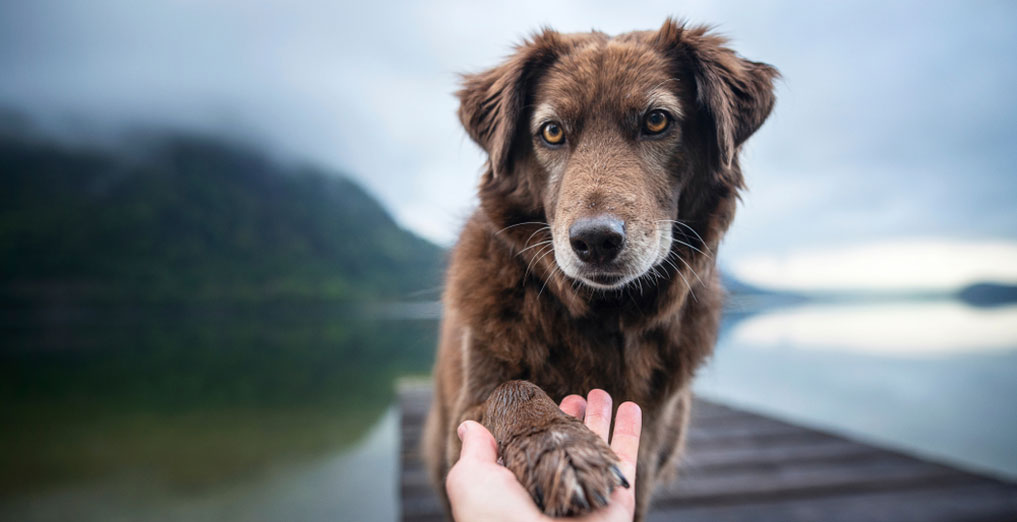 addestrare-cani-con-gesti