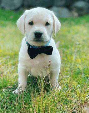 corso-addestramento-cani-cuccioli