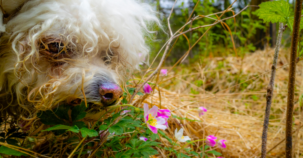 addestrare un cane da tartufo