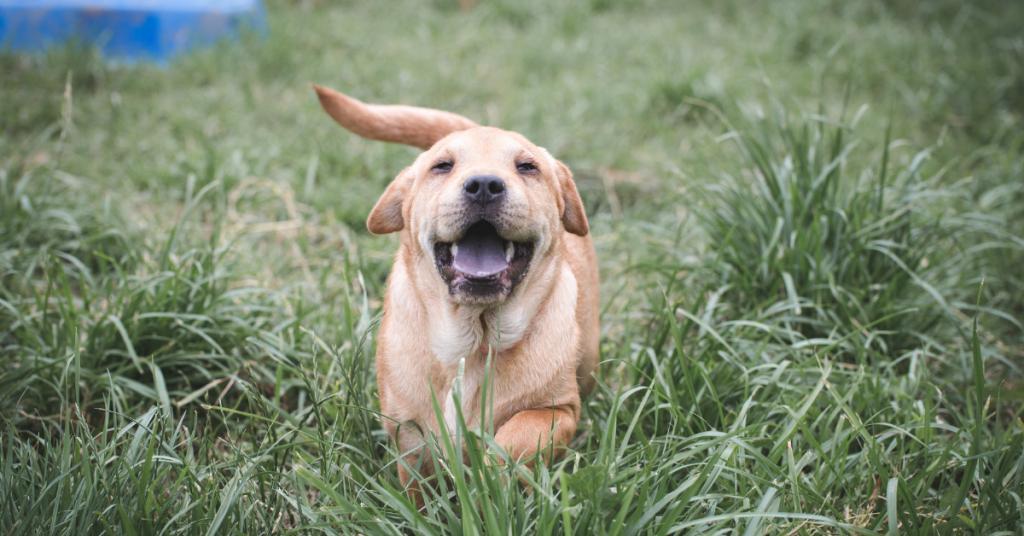 addestrare il cane al richiamo