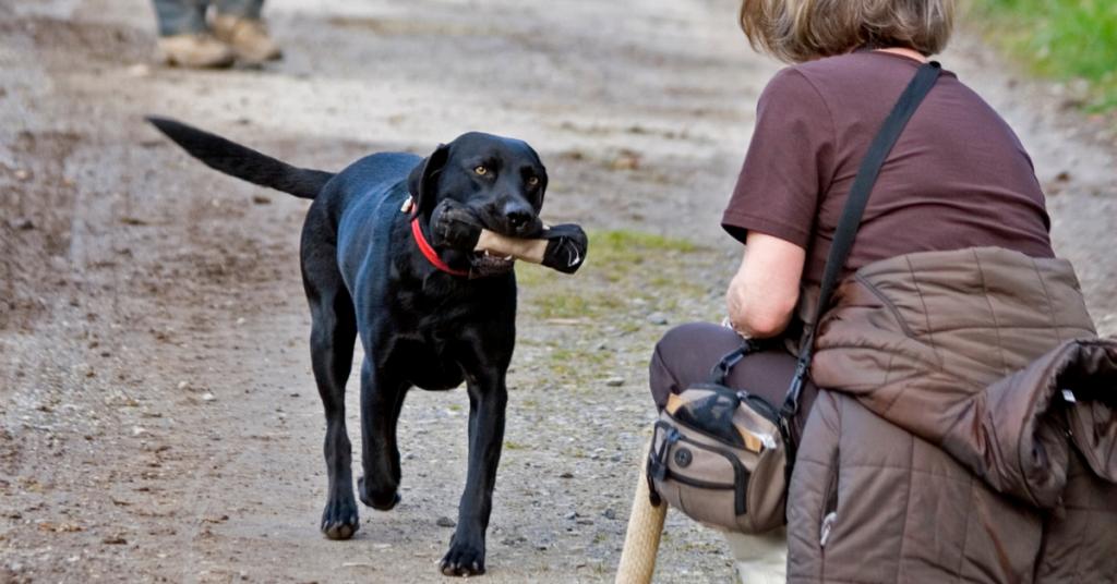 insegnare il richiamo a un cane adulto