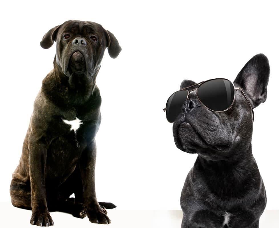 come-addestrare-il-mio-cane