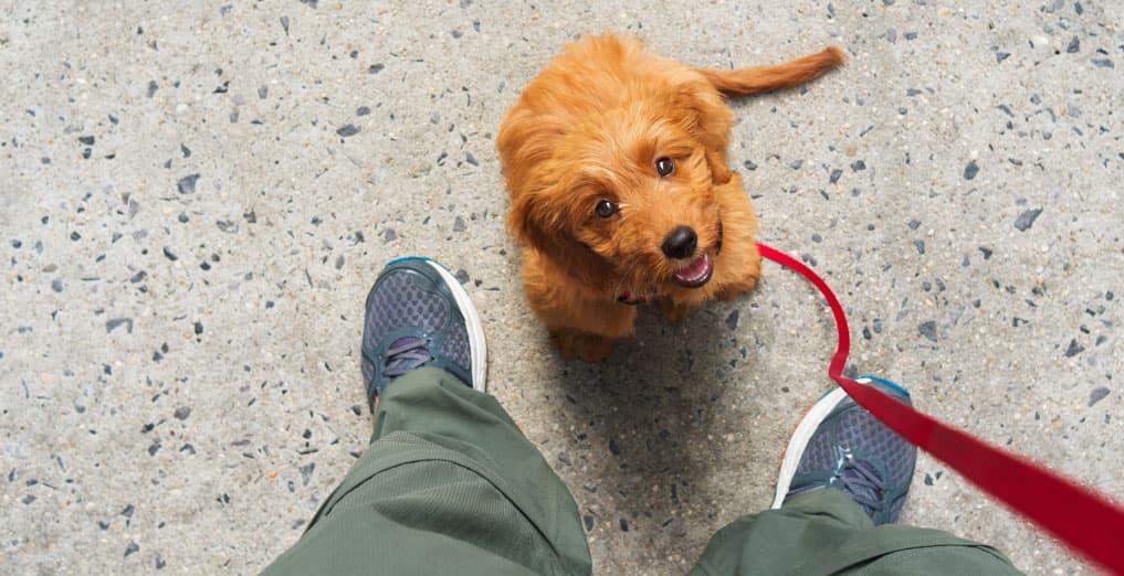minicorso-cane-non-ascolta-padrone