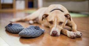 cane non riesce a stare da solo